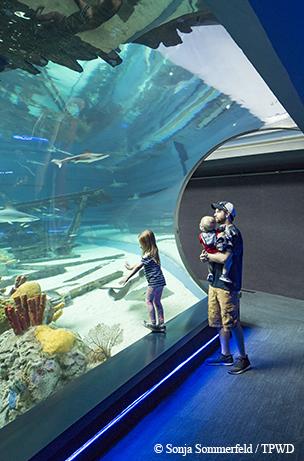 Texas State Aquarium in Corpus Chirsti.  North beach